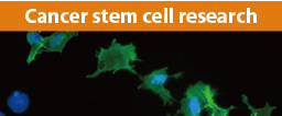 Cancer stem cell research